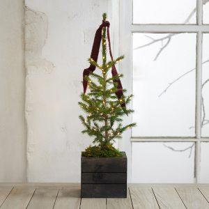 Little Living Tree