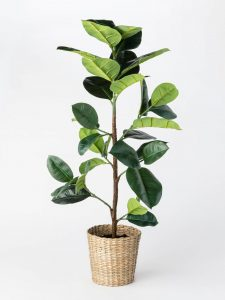 Artificial Rubber Leaf Tree
