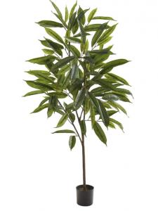 Long leaf ficus plant