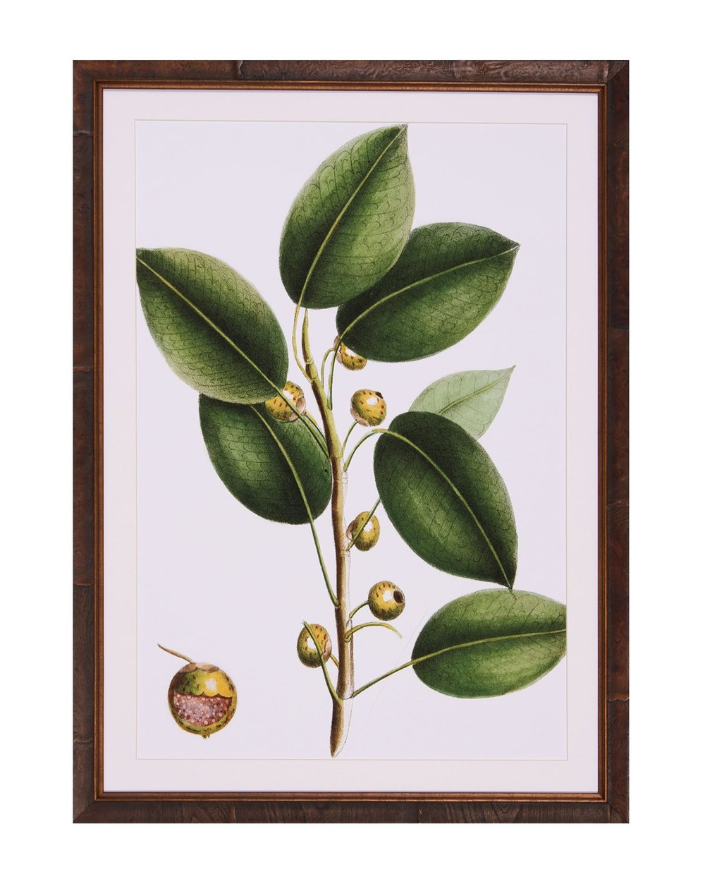 Cherry_Fig_Lithograph_1.jpg