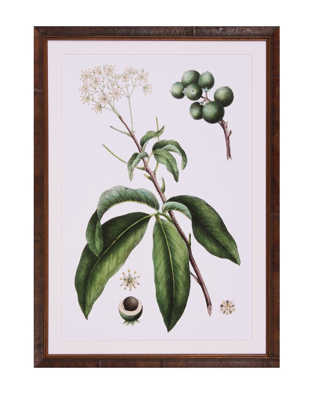 Honeyberry_Lithograph_1.jpg