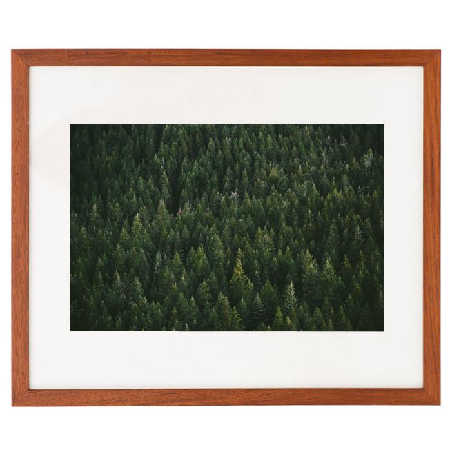 Sonoma_-_Evergreen.jpg