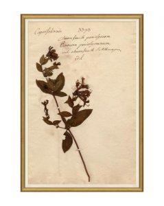 Herbarium Study IV