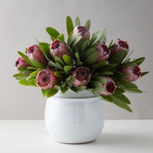 Pink Ice Protea Bunch