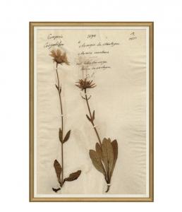 Herbarium Study V