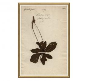 Herbarium Study II