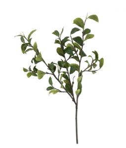 Gardenia Leaf Branch