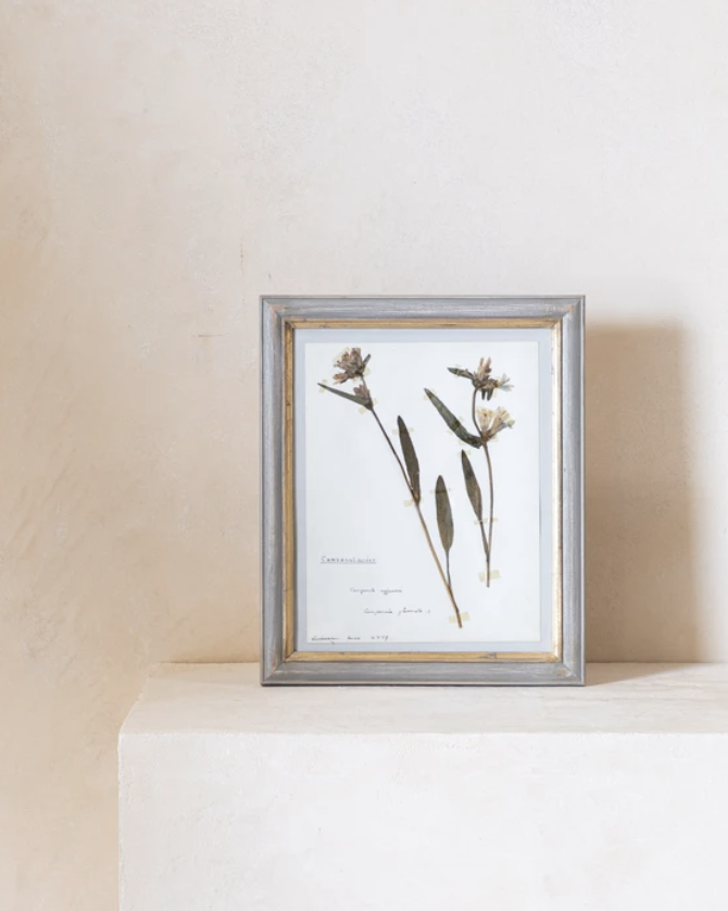 Vintage Pressed Flowers I