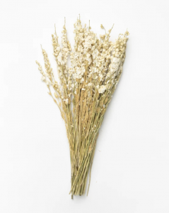 Dried Larkspur Flowers