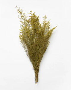 Dried Yellow Caspia