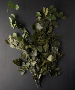 Preserved Beech Leaf Bunch