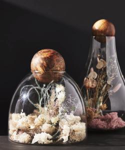 Botanical Sphere Curiosity Terrarium
