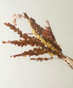 Preserved Stuartiana Eucalyptus Bunch